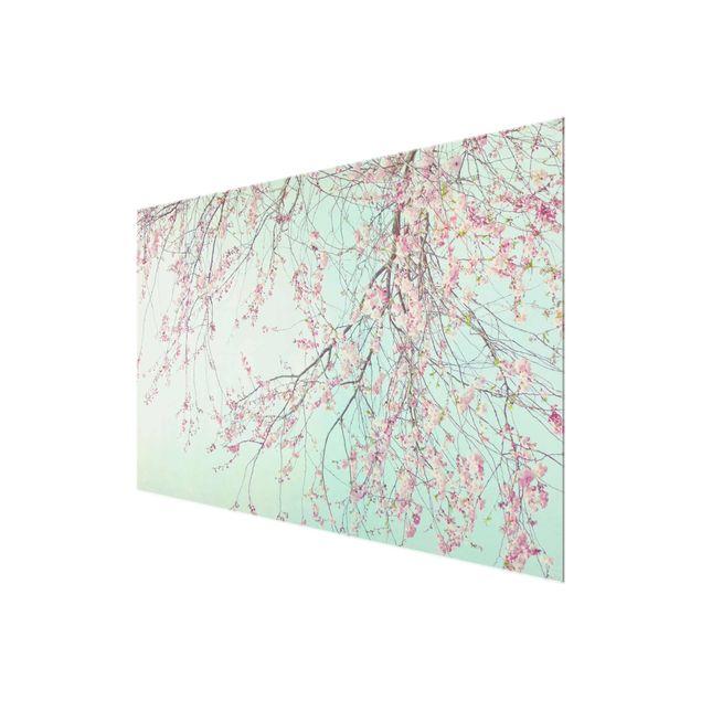 Glasbild - Kirschblütensehnsucht - Querformat