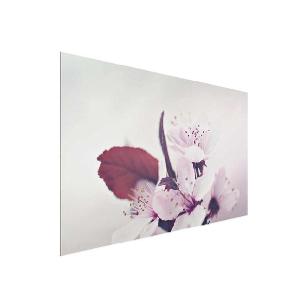 Glasbild - Kirschblütenzweig Altrosa - Querformat