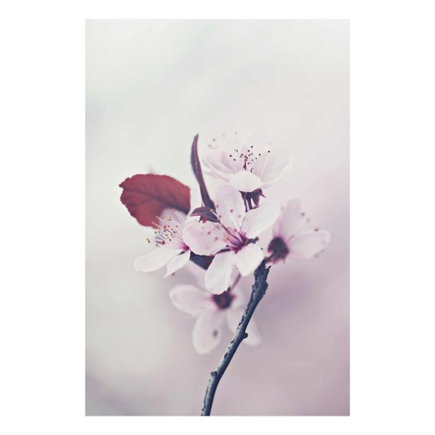 Glasbild - Kirschblütenzweig Altrosa - Hochformat