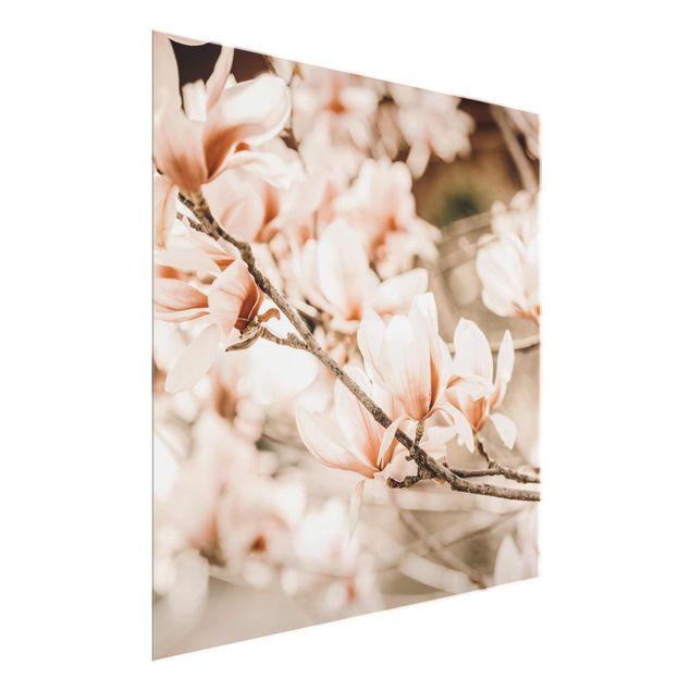 Glasbild - Magnolienzweige im Vintagestil - Quadrat
