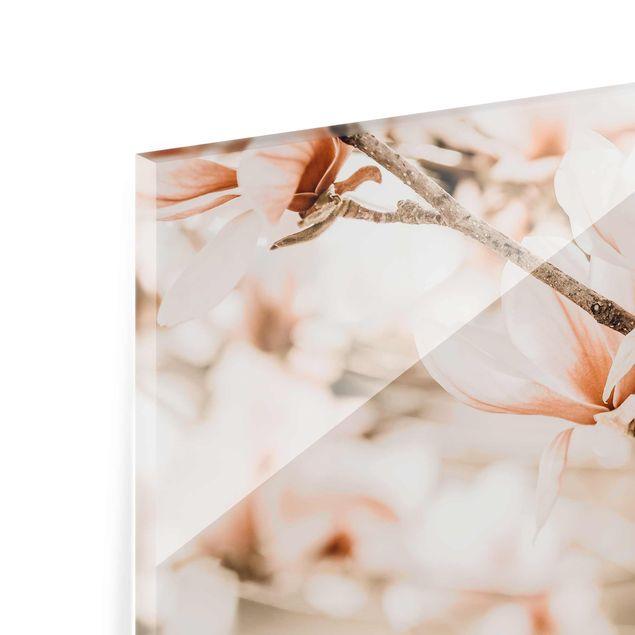 Glasbild - Magnolienzweige im Vintagestil - Querformat