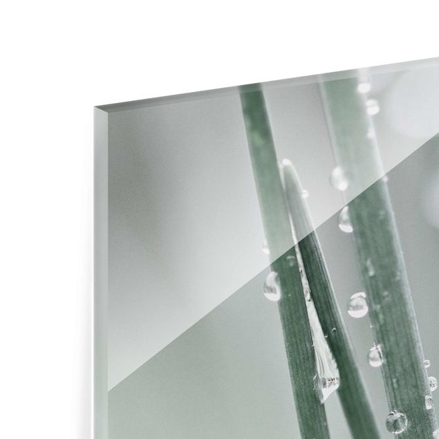 Glasbild - Makroaufnahme Wasserperlen am Gras - Quadrat