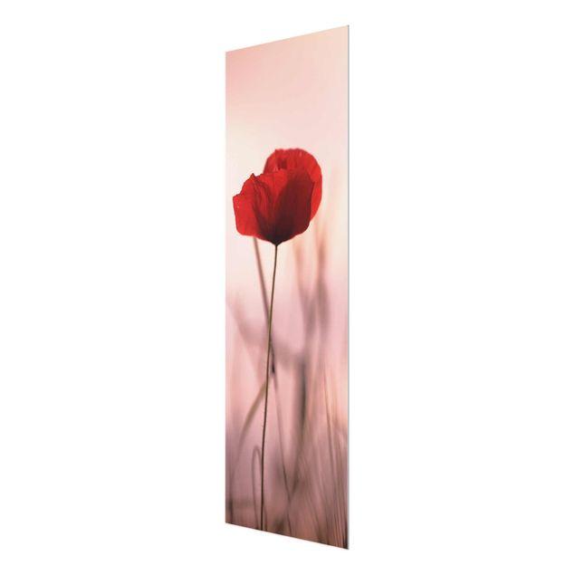 Glasbild - Mohnblüte in der Dämmerung - Hochformat