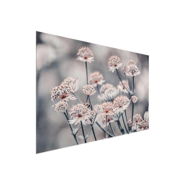 Glasbild - Mystischer Blütenstrauch - Querformat