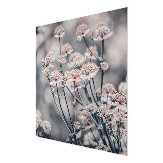 Glasbild - Mystischer Blütenstrauch - Quadrat