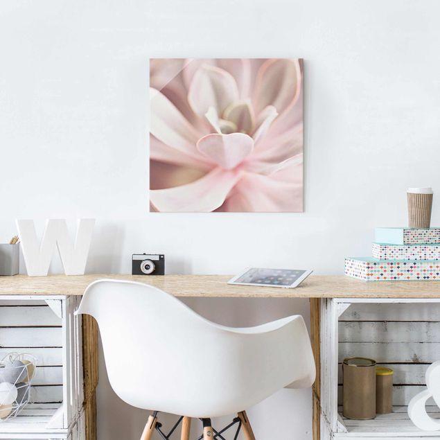 Glasbild - Rosane Sukkulentenblüte - Quadrat