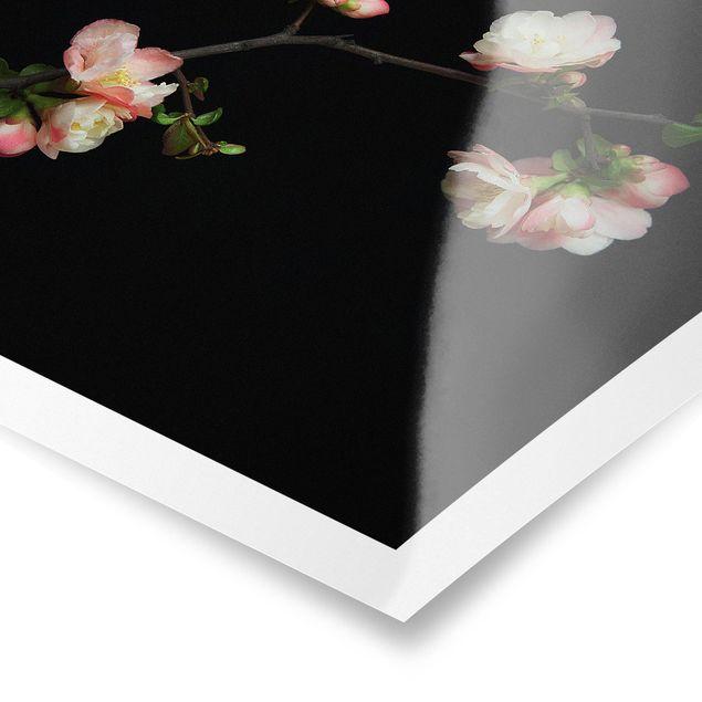 Poster - Blütenzweig Apfelbaum - Quadrat 1:1