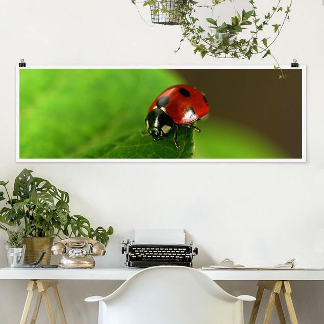 Poster - Lady Bird - Panorama Querformat