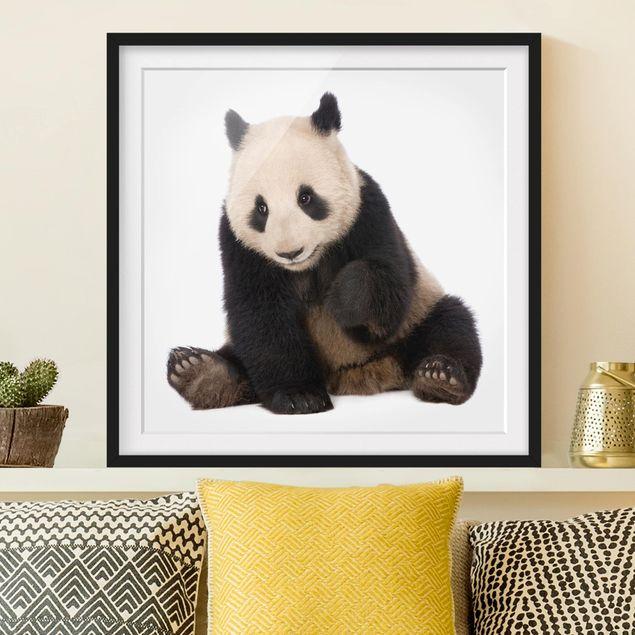 Bild mit Rahmen - Panda Tatzen - Quadrat 1:1