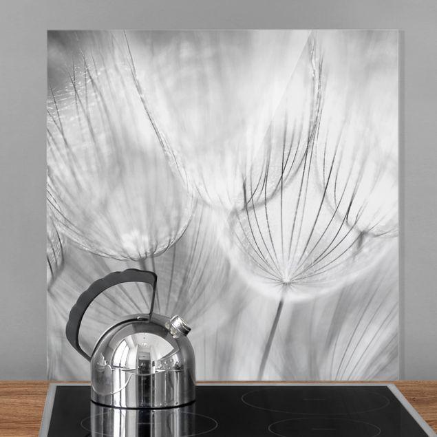 Glas Spritzschutz - Pusteblumen Makroaufnahme in schwarz weiß - Quadrat - 1:1