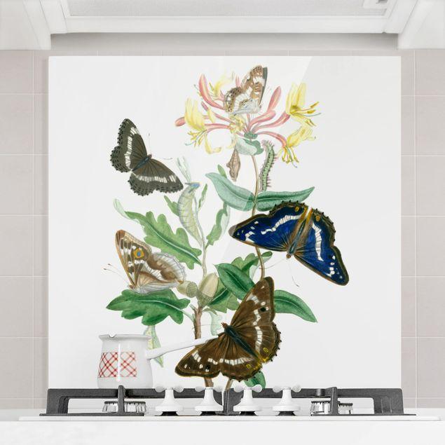 Glas Spritzschutz - Britische Schmetterlinge IV - Quadrat - 1:1