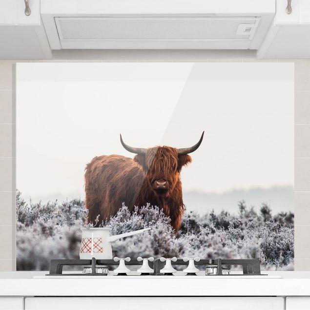 Glas Spritzschutz - Bison in den Highlands - Querformat - 4:3