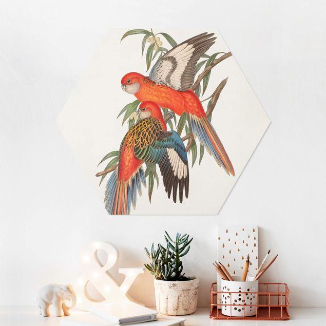 Hexagon Bild Forex - Tropische Papageien I