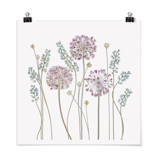 Poster - Allium Illustration - Quadrat 1:1
