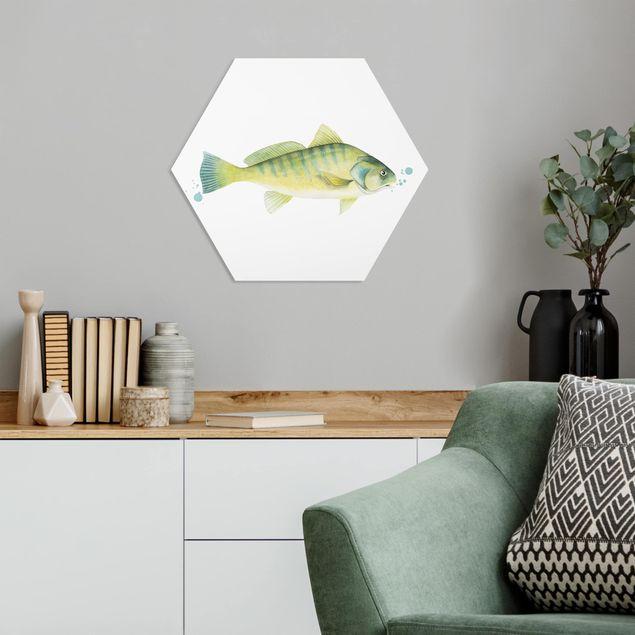 Hexagon Bild Forex - Farbfang - Flussbarsch