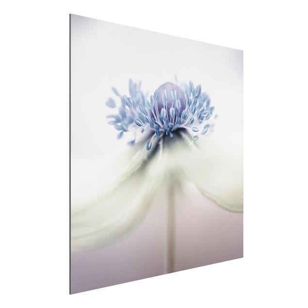 Alu-Dibond Bild - Anemone in Violett