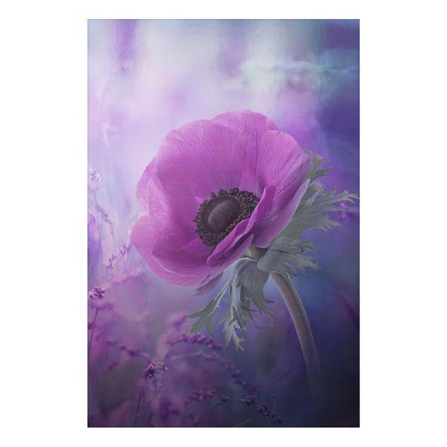 Alu-Dibond Bild - Anemonenblüte in Violett