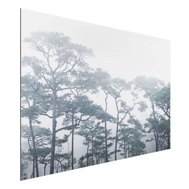 Alu-Dibond Bild - Baumkronen im Nebel