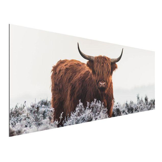 Aluminium Print - Bison in den Highlands - Panorama