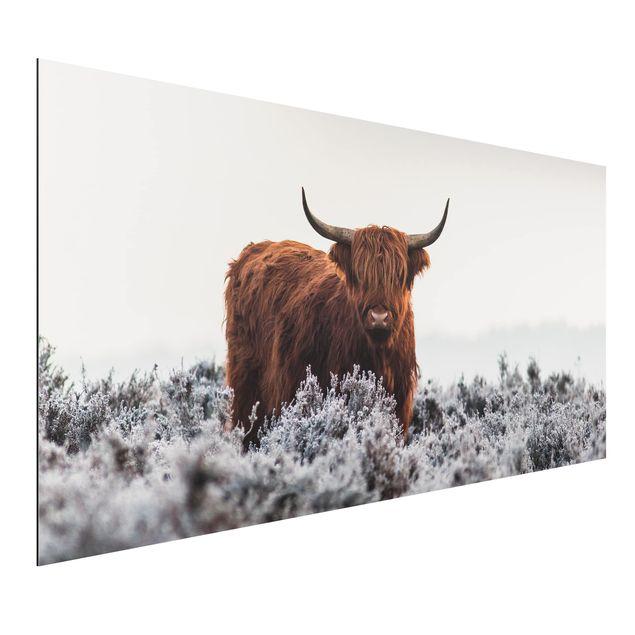 Aluminium Print - Bison in den Highlands - Querformat 1:2
