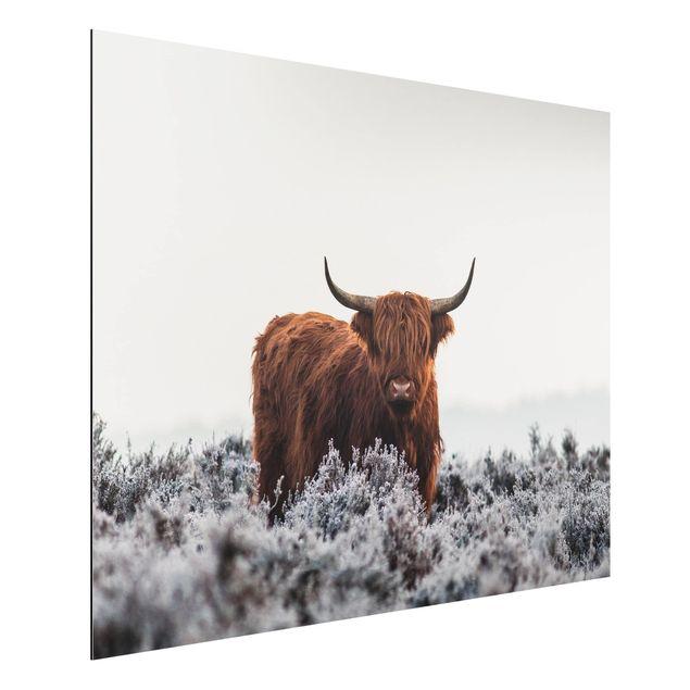 Aluminium Print - Bison in den Highlands - Querformat 3:4