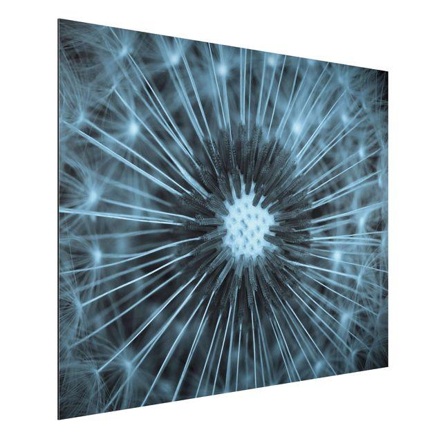 Aluminium Print - Blau getönte Pusteblume - Querformat 3:4