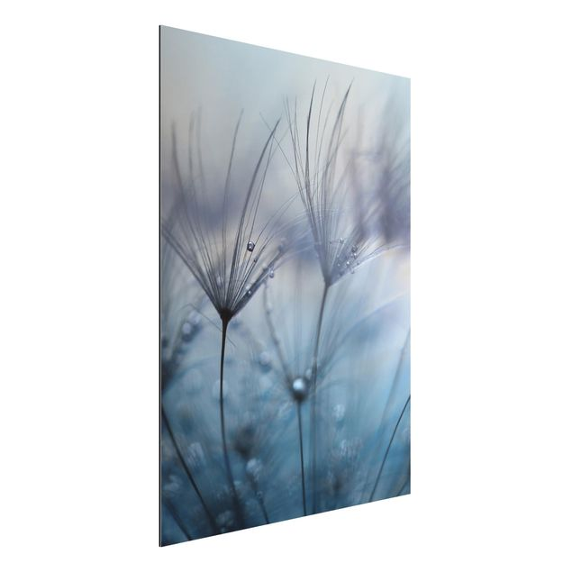 Aluminium Print - Blaue Federn im Regen - Hochformat 4:3