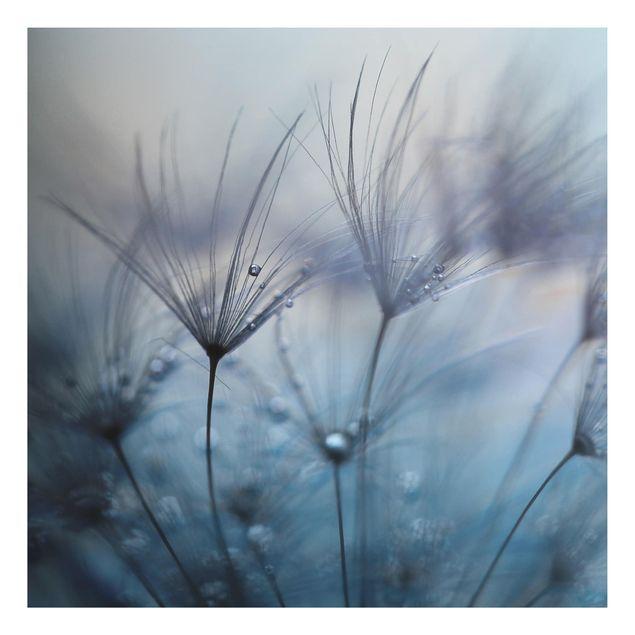 Aluminium Print - Blaue Federn im Regen - Quadrat 1:1