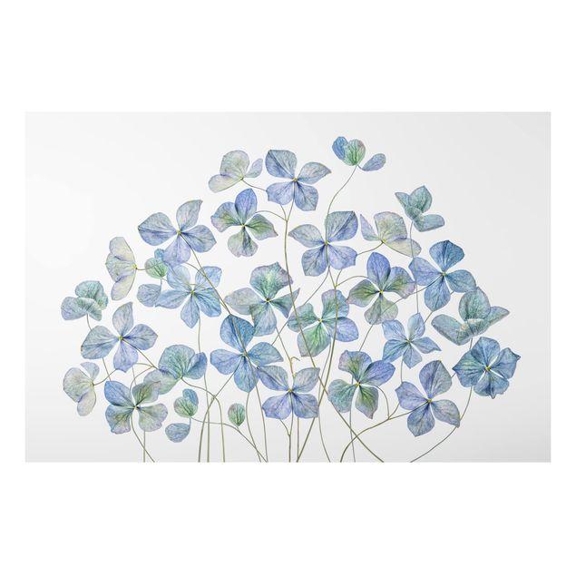 Aluminium Print - Blaue Hortensienblüten - Querformat 2:3
