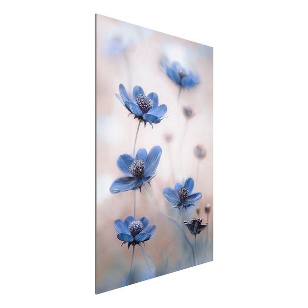 Alu-Dibond Bild - Blaue Kosmeen