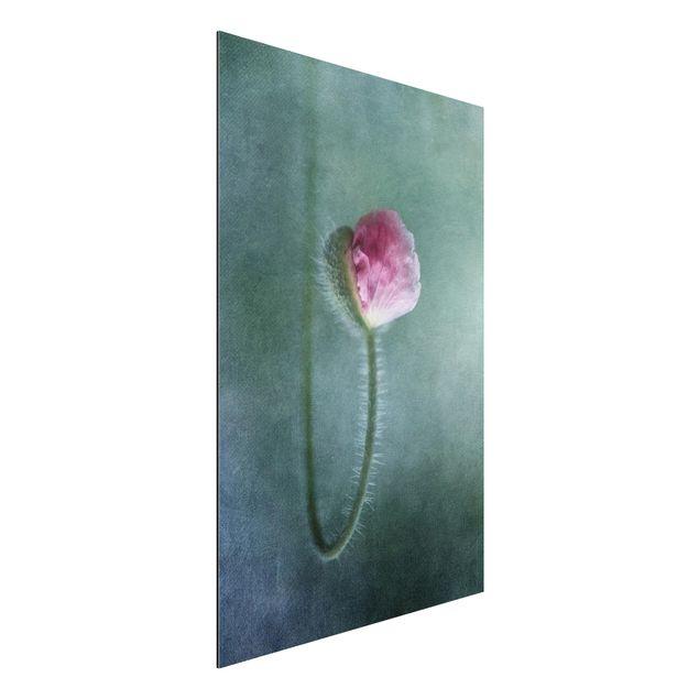 Alu-Dibond Bild - Blüte in Rosa