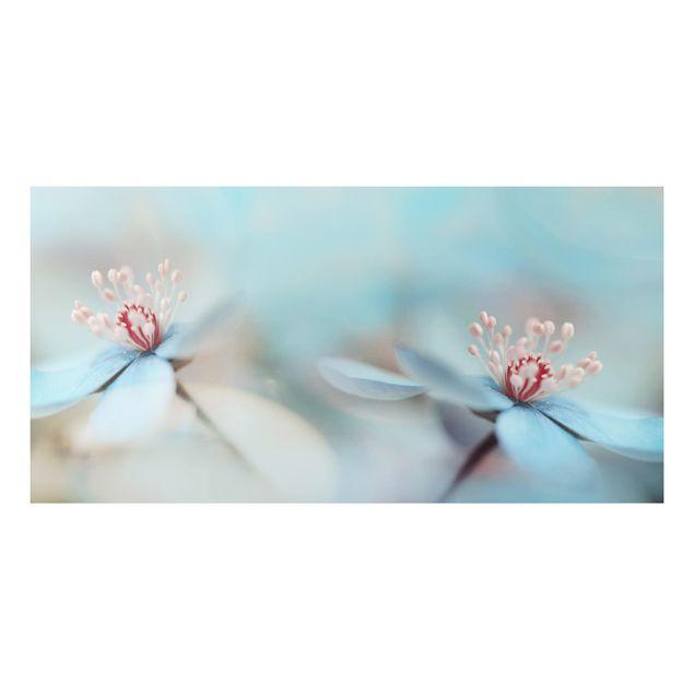Alu-Dibond Bild - Blüten in Hellblau