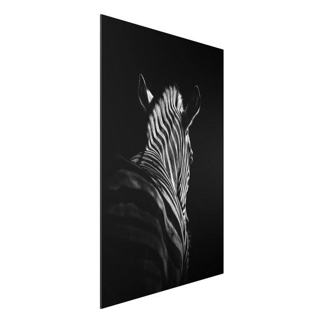 Aluminium Print - Dunkle Zebra Silhouette - Hochformat 3:2