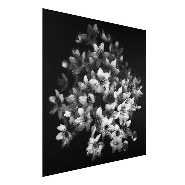 Aluminium Print - Dunkler Clematis Strauß - Quadrat 1:1