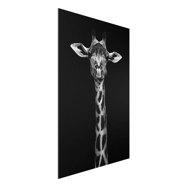 Aluminium Print - Dunkles Giraffen Portrait - Hochformat 3:2