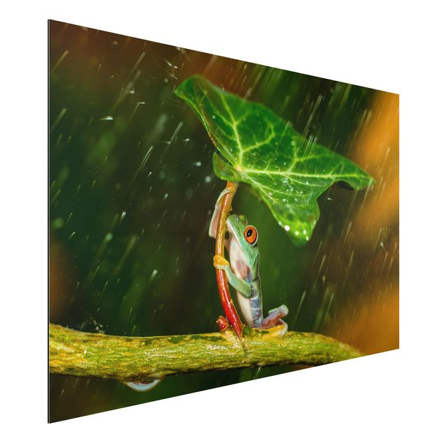 Aluminium Print - Ein Frosch im Regen - Querformat 2:3