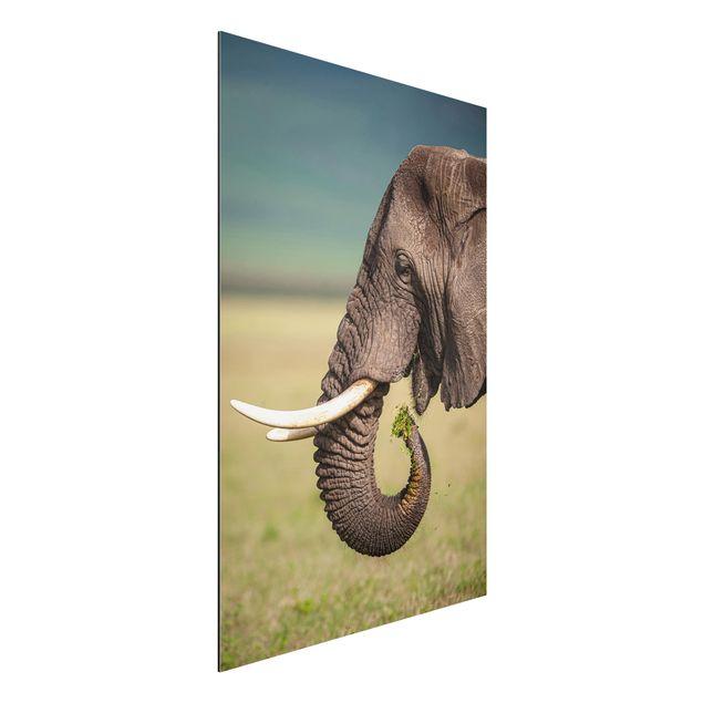 Aluminium Print - Elefantenfütterung Afrika - Hochformat 3:2