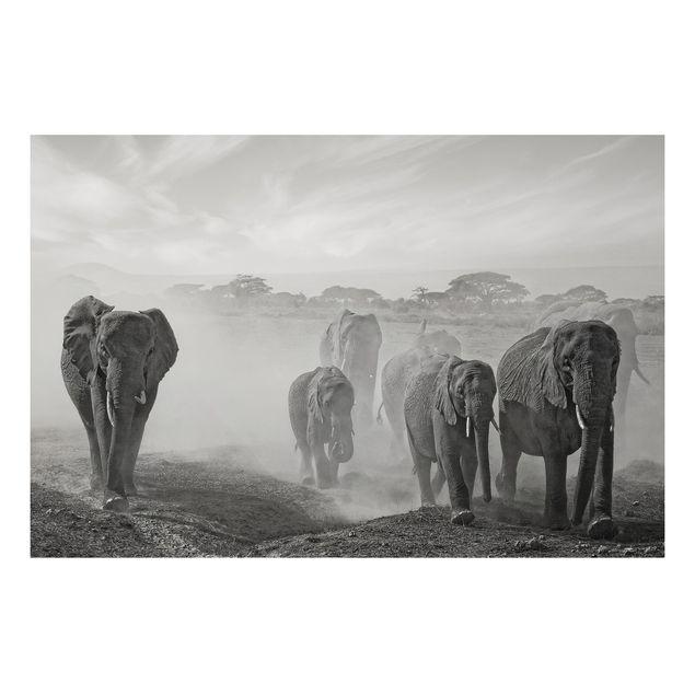 Alu-Dibond Bild - Elefantenherde
