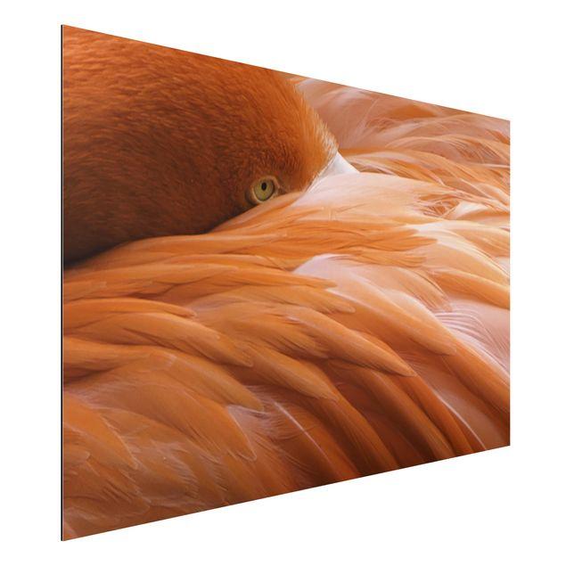 Alu-Dibond Bild - Flamingofedern