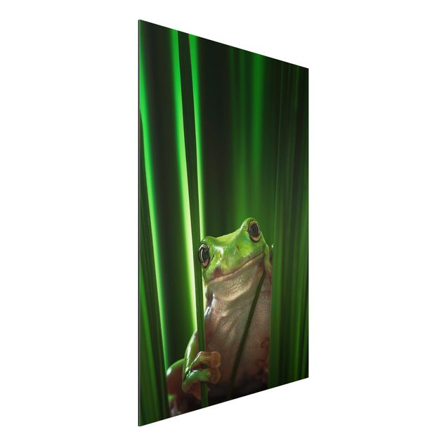 Alu-Dibond Bild - Fröhlicher Frosch