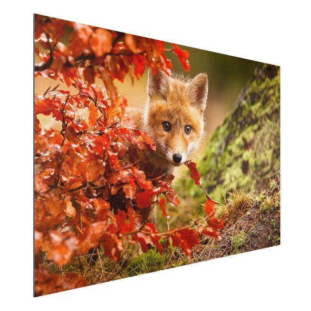 Alu-Dibond Bild - Fuchs im Herbst
