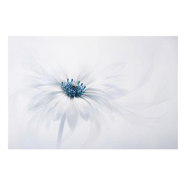 Alu-Dibond Bild - Gänseblümchen in Blau