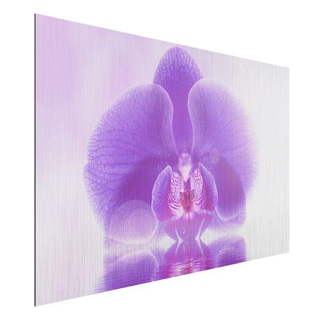 Alu-Dibond Bild - Lila Orchidee auf Wasser