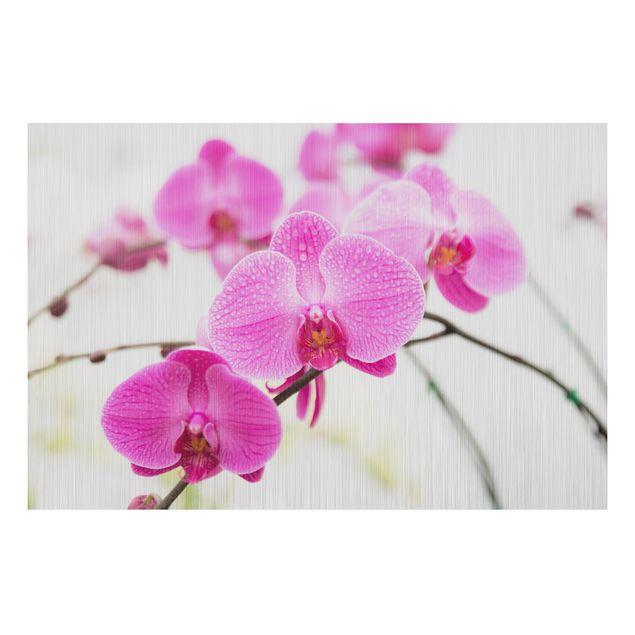 Alu-Dibond Bild - Nahaufnahme Orchidee