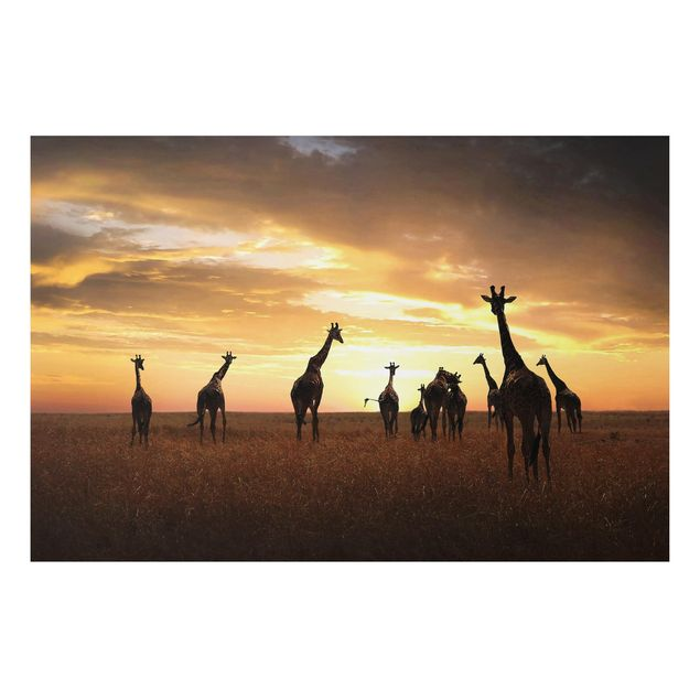 Alu-Dibond Bild - Giraffen Familie