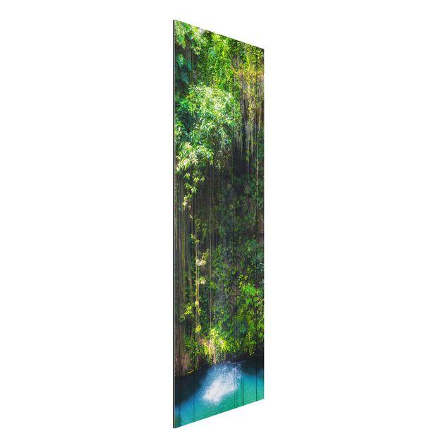 Alu-Dibond Bild - Hängende Wurzeln von Ik-Kil Cenote