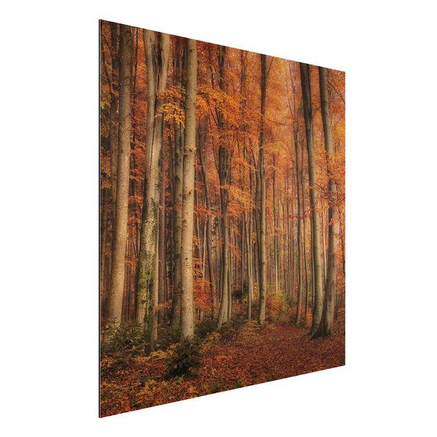Alu-Dibond Bild - Herbstspaziergang