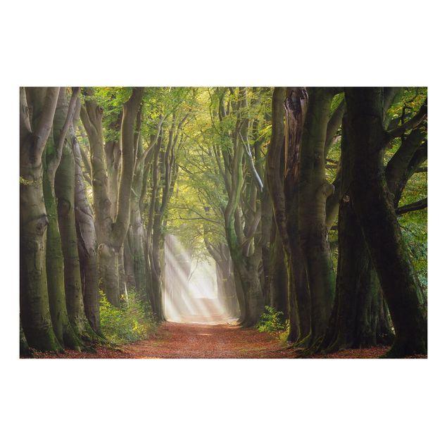 Alu-Dibond Bild - Herrlicher Tag im Wald