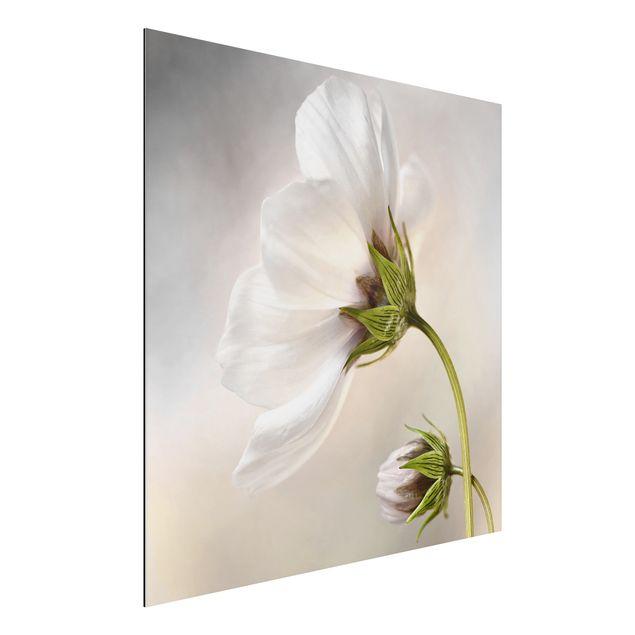 Alu-Dibond Bild - Himmlischer Blütentraum