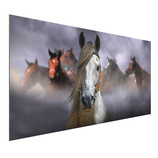 Alu-Dibond Bild - Horses in the Dust